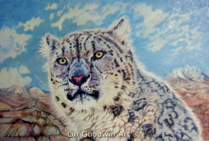 """Irma the Snow Leopard"" © Lin Goodwin"